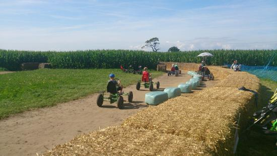 Easingwold Maize Maze