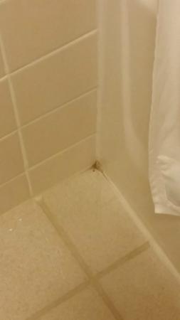 AmeriVu Inn and Suites - Shell Lake: bathroom mold