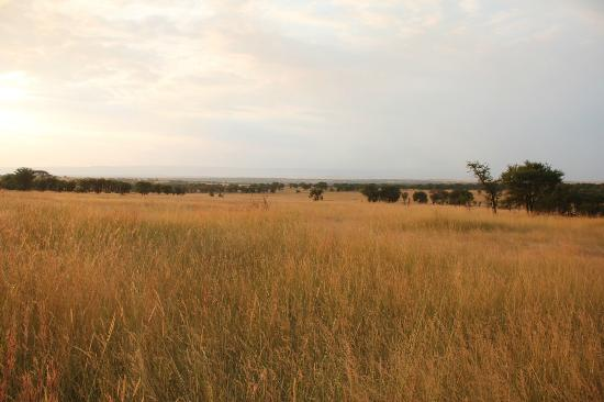 Mara Under Canvas Tented Camp: View