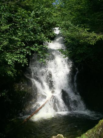 Ketchikan Taxi Cab Tours: Breathtaking waterfall