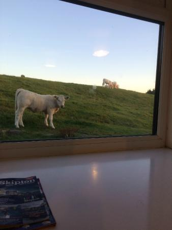 Chevin End Guest House: Cows outside the room!
