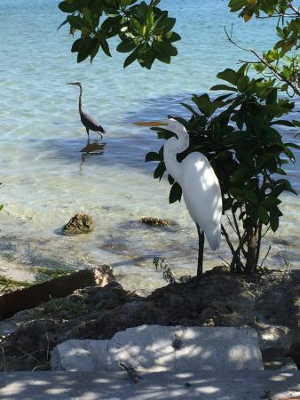 Coquina Baywalk: Saw these birds chillin!