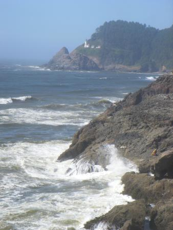Florence, OR: Heceta Head Lighthouse and sea lions on cliffs (view from inside cave)