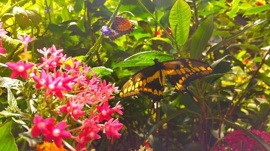 Smithsonian Butterfly Habitat Garden: Beautiful A Must See!