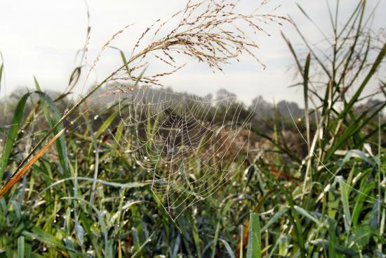 Suraz, Πολωνία: Nadnarwiańskie klimaty