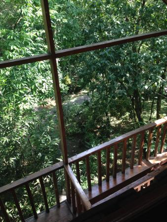 Tree Houses Hotel Costa Rica : View from the Toucan. Very private with sounds of birds and Howler Monkeys all around.