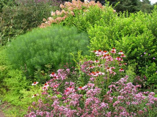 Polly Hill Arboretum: Flowering bed at the arboretum