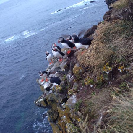 Latrabjarg, IJsland: It's wonderful to get so close to puffins. They are adorable, trustful, and so photogenic.