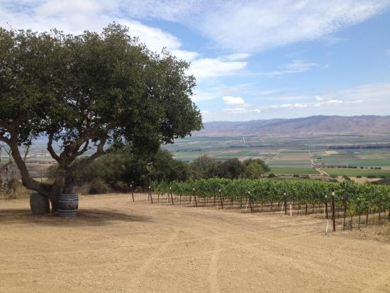 Smith & Hook Winery: Top of the Vineyard on ATV Tour