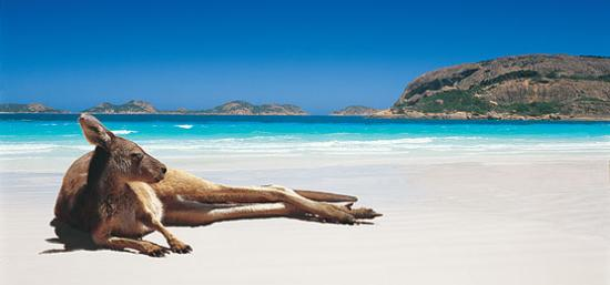 Clearwater Motel Apartments Best Beaches In Australia Just Ask The Kangaroos
