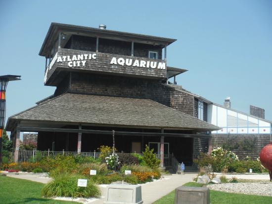 The Elusive Sea Turtle Picture Of Atlantic City Aquarium