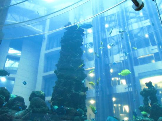 aqua dom picture of aquadom sea life berlin berlin tripadvisor. Black Bedroom Furniture Sets. Home Design Ideas