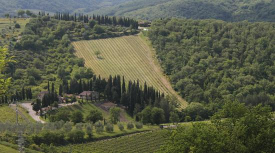 Il Paggino: Great views over the valley