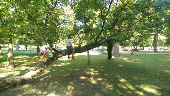 Utopia on the River: climbing tree
