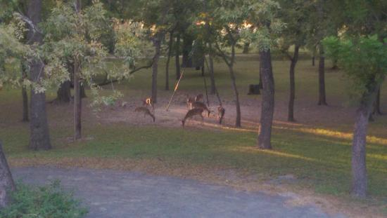 Utopia on the River: deer feeding in evening