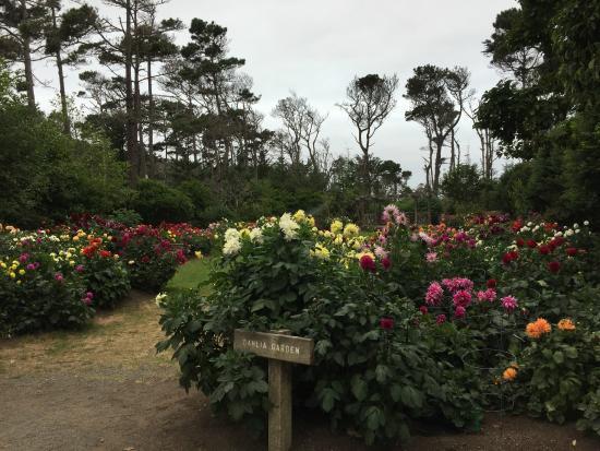 Unexpected delight in garden picture of mendocino coast - Mendocino coast botanical gardens ...
