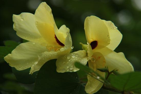 Aahana the Corbett Wilderness: Flora