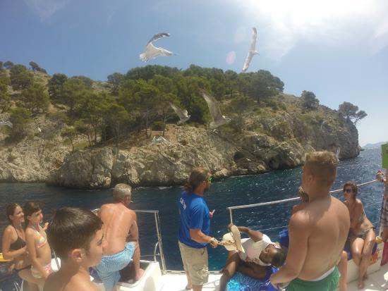 Foto de cruceros brisa transportes mar timos port d - Transportes palma de mallorca ...