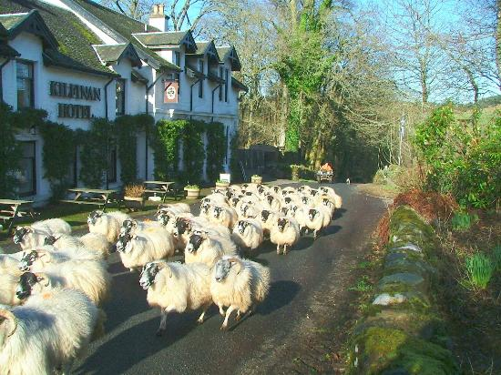 Kilfinan Hotel: Rush Hour in front of the Hotel