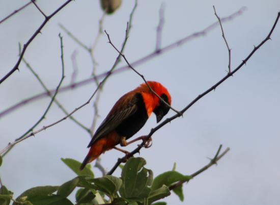 Malaui: One of the many birds around
