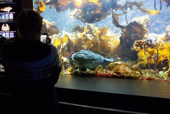 ... sembrano finti...? - Foto di Bergen Aquarium, Bergen - TripAdvisor