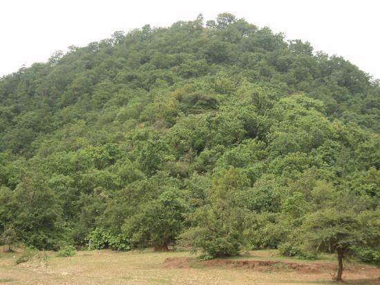 Jambughoda India  city photos gallery : Jambughoda Wildlife Sanctuary: Jambughoda