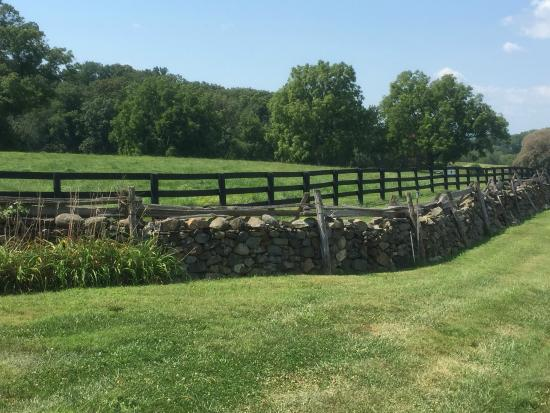 Middleburg Country Inn: Horse Country