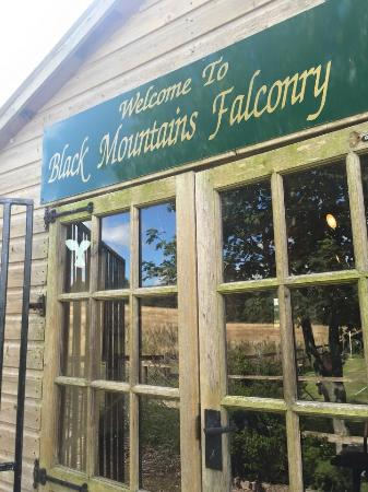 South Wales, UK: Black mountain falconry