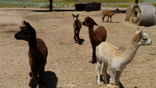 Victory Ranch: They're not quite sure they trust me, but I might have something yummy for them... :D