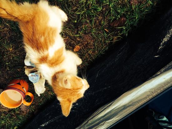 Duga Resa, Κροατία: Charlie the camp kitten