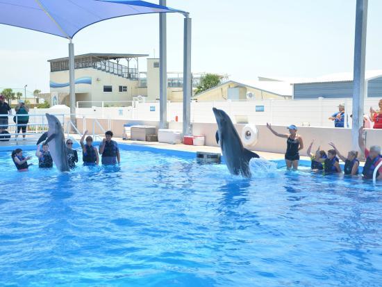 Dolphin Splash Encounter 5 Picture