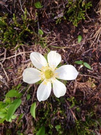 Golden, Καναδάς: Flowers on hike to Gorman Lake.