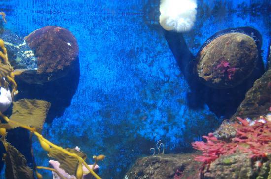 Sea Horse Picture Of Birch Aquarium At Scripps La Jolla