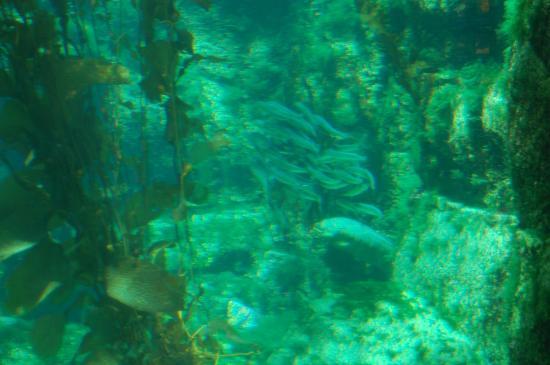 View Of La Jolla From Aquarium Picture Of Birch Aquarium At Scripps La Jolla Tripadvisor