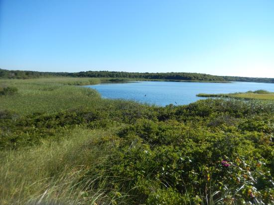 South Cape Beach State Park: Pond view from bench in dune