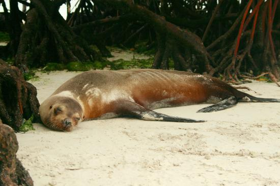 El Castillo Galapagos: on the beach