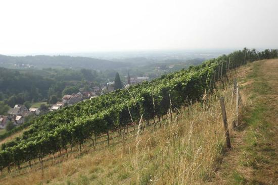 Pension am Weinberg: vigne