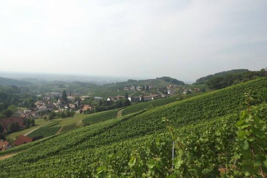 Pension am Weinberg: vigne