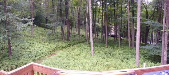Pocono Lake, PA: View from deck