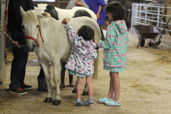 Tredethick Farm Cottages: grooming the pony