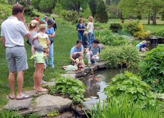 Wayne, PA: Folks enjoying the koi pond at Chanticleer May 2015