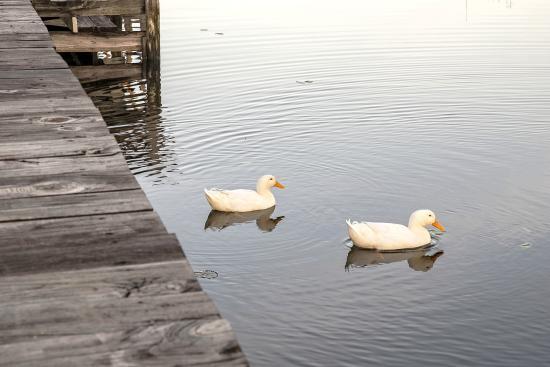 Hampton Lake Bed and Breakfast: Peaceful