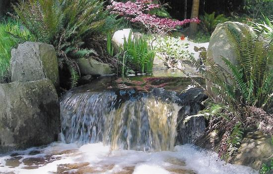Serenity by the Sea Retreat: A water garden sings with many 'voices' from fall through to summer