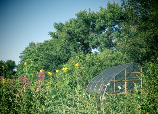 Butterfly garden on the campus kuva the outdoor campus for Garden shed tripadvisor