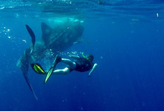 Ceviche Tours: Whale shark