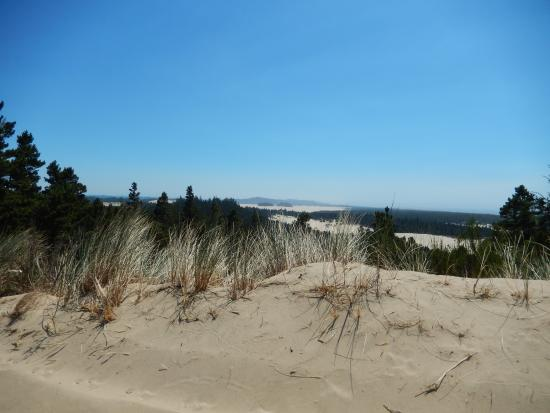 Florence, OR: View of Oregon Dunes from sand buggy