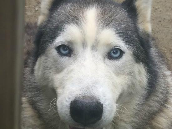 Elmore, VT: Peace Pups
