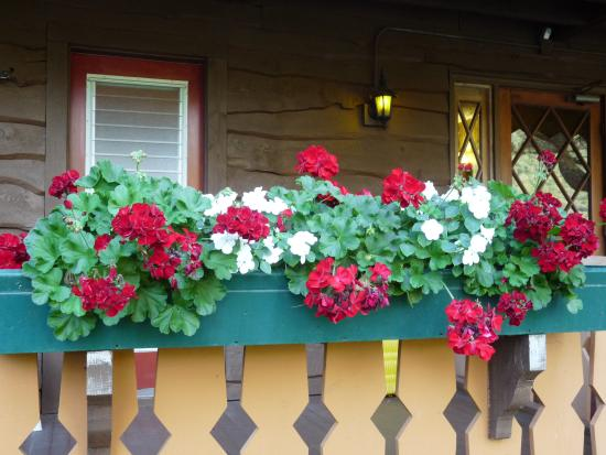 The Alpine Inn: plants outside every bedroom