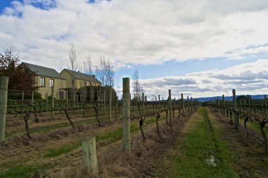 Bella Vedere Cucina: Vineyards Setting