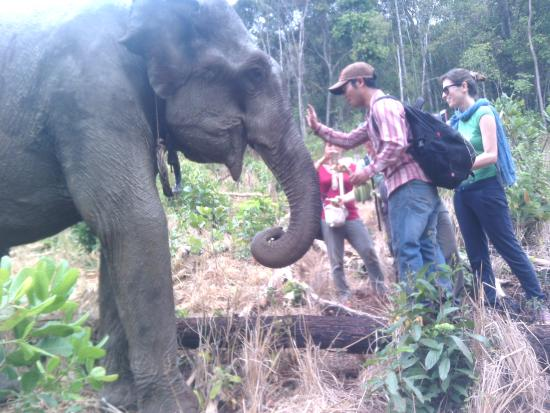 Mondulkiri Province, Καμπότζη: feeding elephant after washing with mondulkiri ethnic project